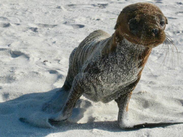 baby sea lion on espanola island