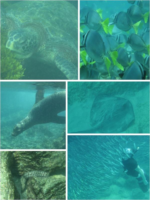Snorkelling Galapagos islands, snorkelling espanola island