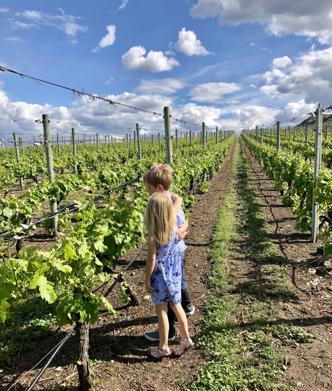 Hester creek Oliver wineries