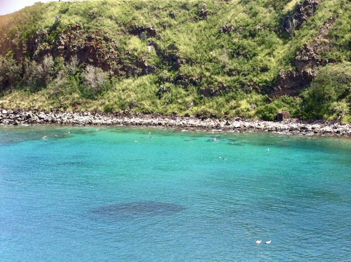 snorkelling in Maui